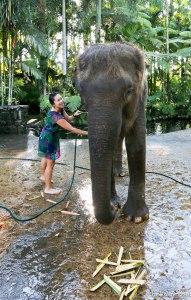 IMG_3604 Lu washing elephant