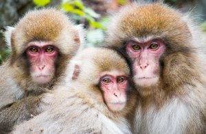 IMG_3608 Snow monkeys_no wm