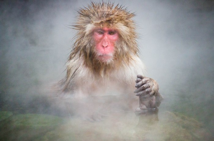 IMG_3762 Snow monkey_no wm